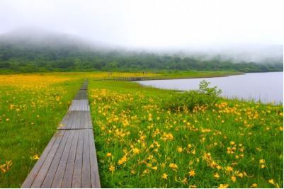 天然記念物雄国沼湿原植物群落