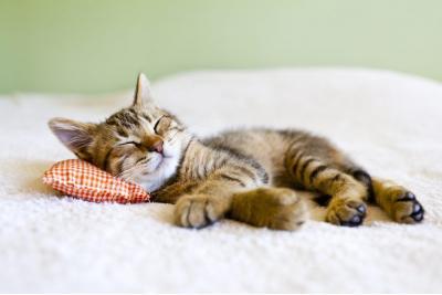 寝そべるトラねこ