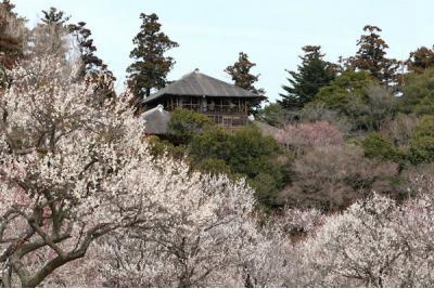 茨城県旅行のおすすめ観光スポット人気投票