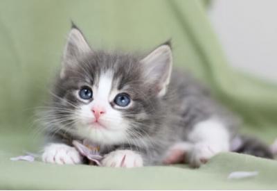 好きな猫😺の種類はなんですか?