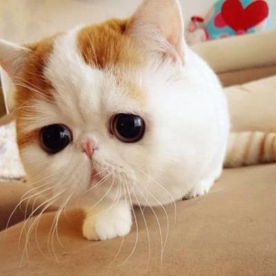 かわいいネコ画像 選手権!